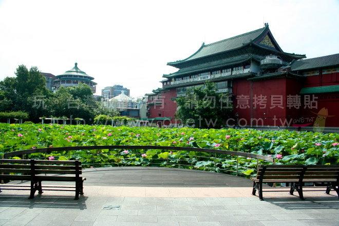 台北植物园,莲花花季景点照片1/玩.台湾