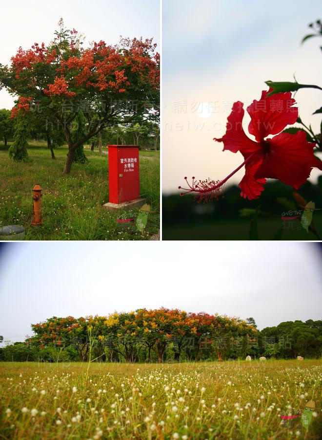 栾树花海缤纷开放,随处可见黄色花朵与红色蒴果烽火满天的鲜艳.